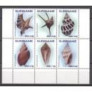 Suriname 2017 04 Schelpen