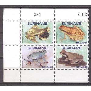 Suriname 2020 07 Kikkers